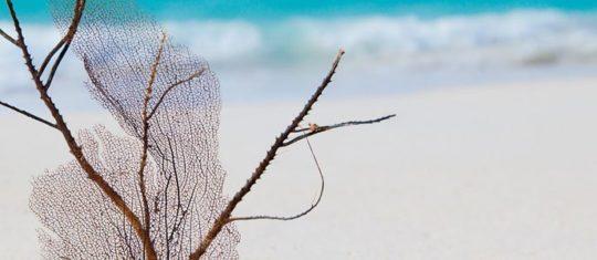 coquillages-et-decoration-marine